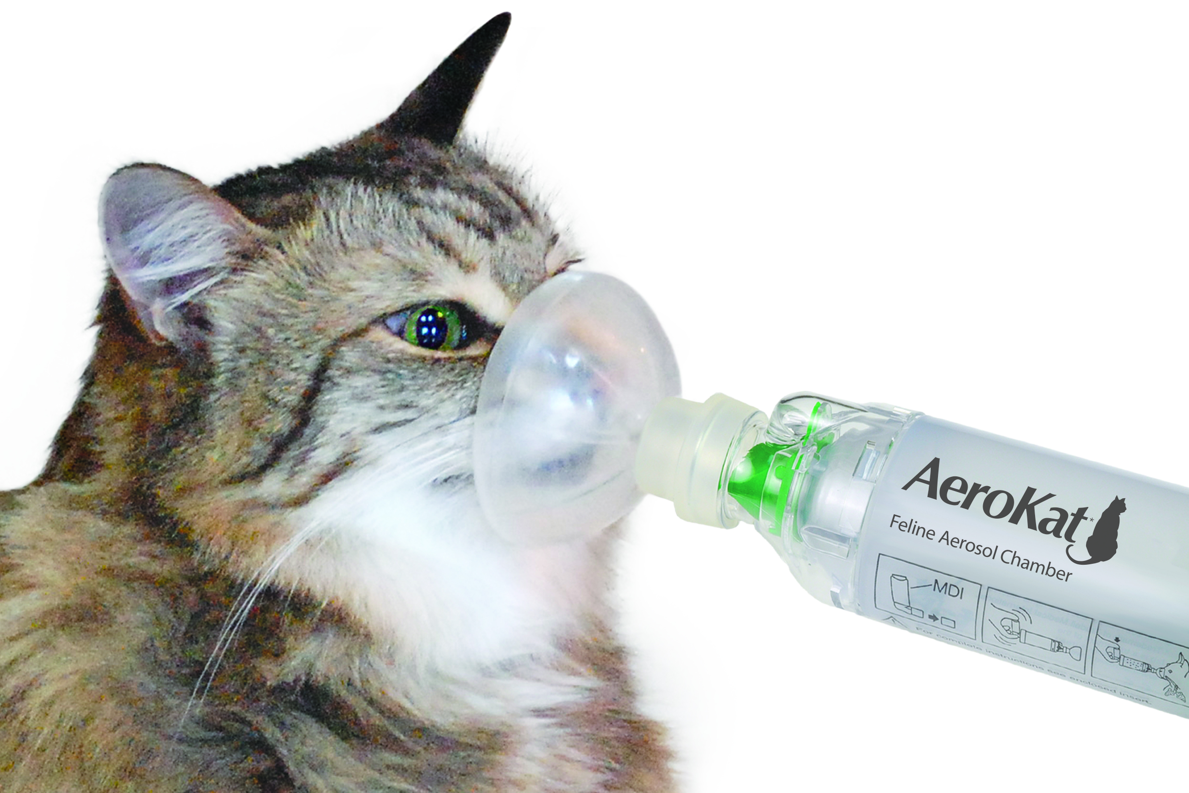 Does My Cat Have Asthma