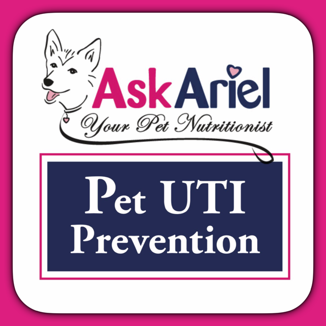 Uti Infections Dogs Symptoms How To Prevent