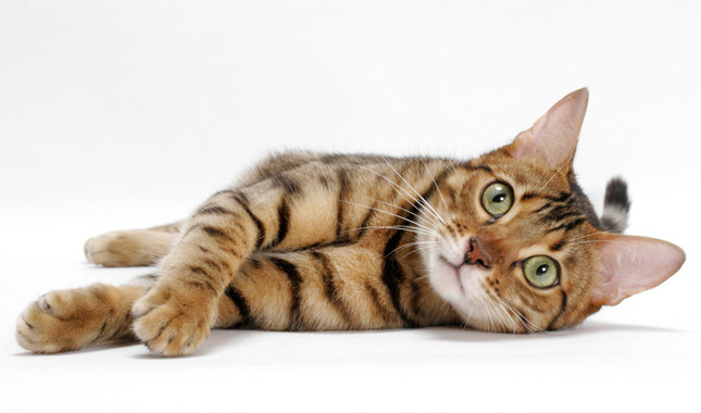 Best Natural Anti Inflammatory Ibd Cats